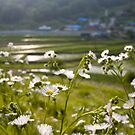 Wildflowers and a village in South Korea by koreanrooftop