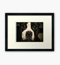 Dog with the Bulging Eyes Framed Print