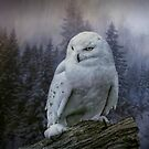 Snowy owl looking for prey by Brian Tarr