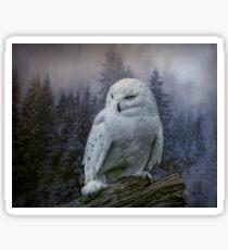 Snowy owl looking for prey Sticker
