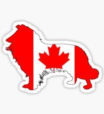 Canada Border Collie Sticker