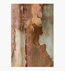 Brown Bark Zip Photographic Print