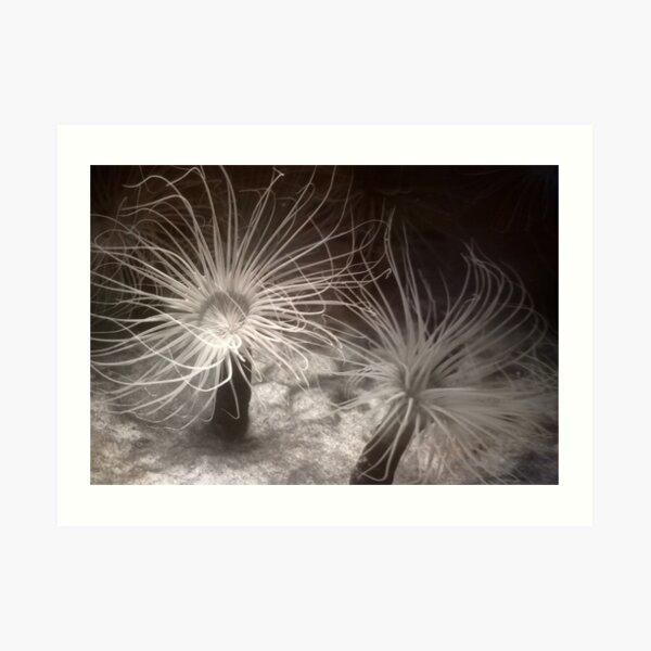 Sea Anemones Art Print