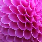 Pink Puzzle by John Dalkin