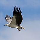 Fly Sky High by byronbackyard