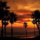 Oceanside Sunset by Susan P Watkins