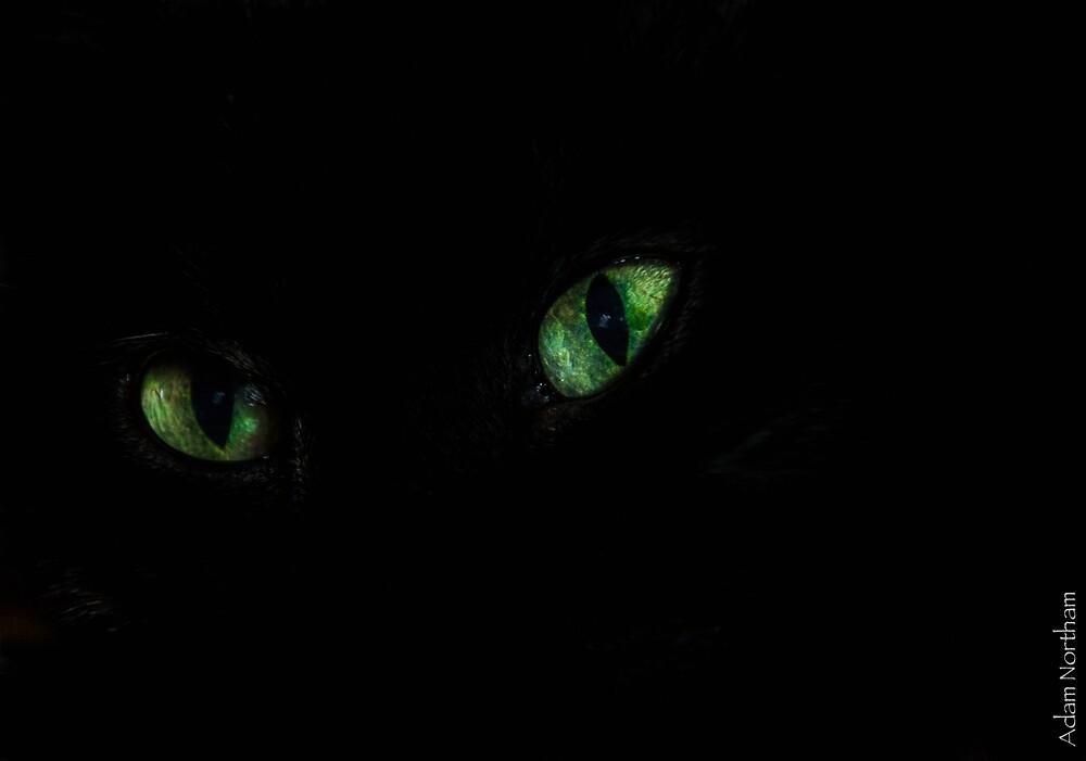 Eye'm Watching by Adam Northam