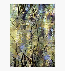 Willow Water Photographic Print