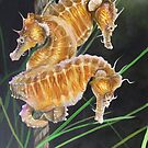 Pacific Lined Seahorse Trio by Phyllis Beiser