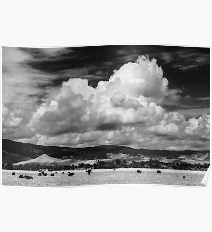 Colorado Cattle Ranch In Black and White Poster