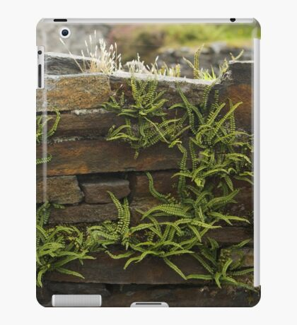 Spleenwort Maidenhair fern on wall at Cashelnagor iPad Case/Skin