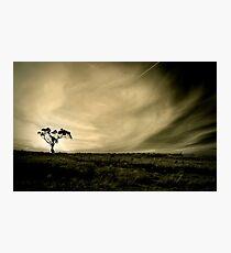 Tasmania's countryside Photographic Print