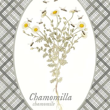 Chamomile Bees by historicnature