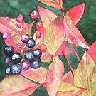 Berries by Sandra England