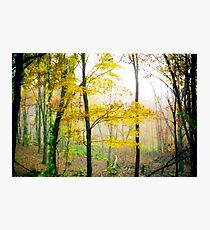Enchanted Autumn Woods Photographic Print