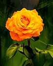 Golden Rose - Howard Flowery by DPalmer