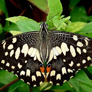 Butterfly black by Fl0werdauqhter