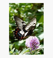 Orchard Swallowtail Photographic Print