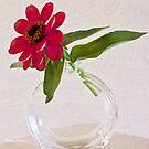 Single Pink Zinnia Blossom by Sandra Foster