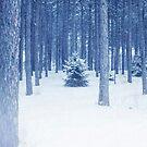 O Christmas tree by Angela King-Jones