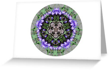 Crocus Mandala by Suzanne LaFleur