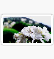 Flowers at Fiesole Sticker