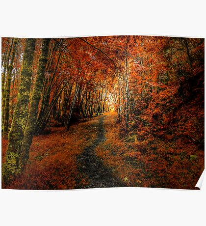 Trails In The Woods ~ Old Santiam Wagon Road ~ Poster