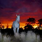 Silver horse sunset by Penny Kittel