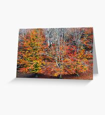 Autumn Beeches Greeting Card