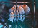 Under Glass by Lynda Heins