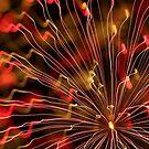 fireworks 29/11/14 by david gilliver