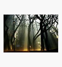 Lantern Waste Photographic Print