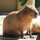 Capybara by ScenerybyDesign
