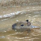Baby Capybara by ScenerybyDesign
