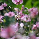 Beautiful pink blossoms  by Prettyinpinks