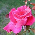 Rose..... by Ana Belaj