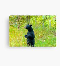 Standing Black bear  Canvas Print