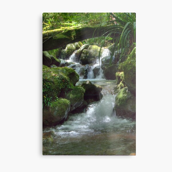 Waterfall,Lamington National Park, Queensland, Australia  Metal Print