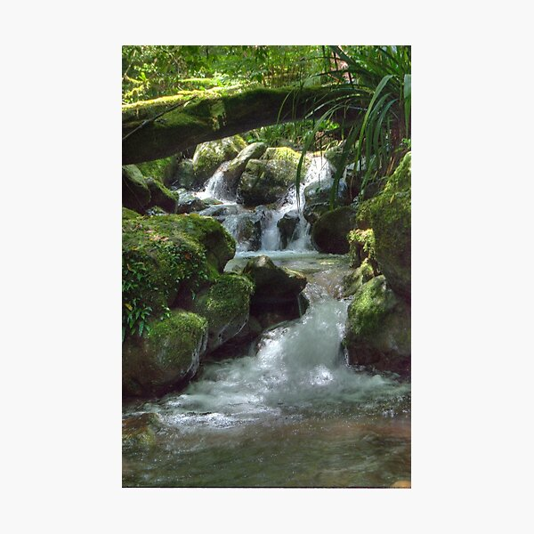 Waterfall,Lamington National Park, Queensland, Australia  Photographic Print