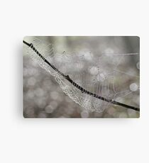 Forest Jewels, spiderweb, Canon EOS 10D Canvas Print