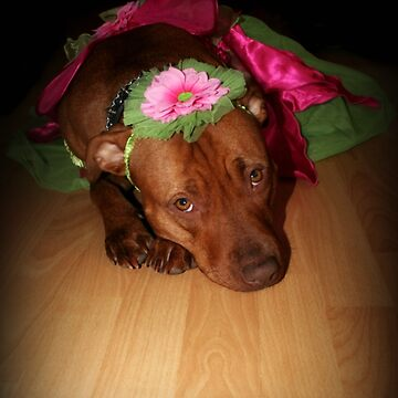 The Truth About Pitbulls Series - Part 1 - *We love to play dress up* by KristinaGale