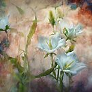 Campanula on the Wild Side by Teresa Pople