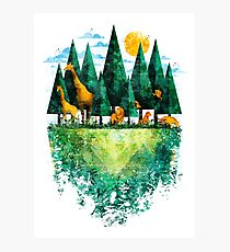 Geo Forest Photographic Print