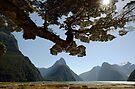 Milford Sound by Frank Kletschkus