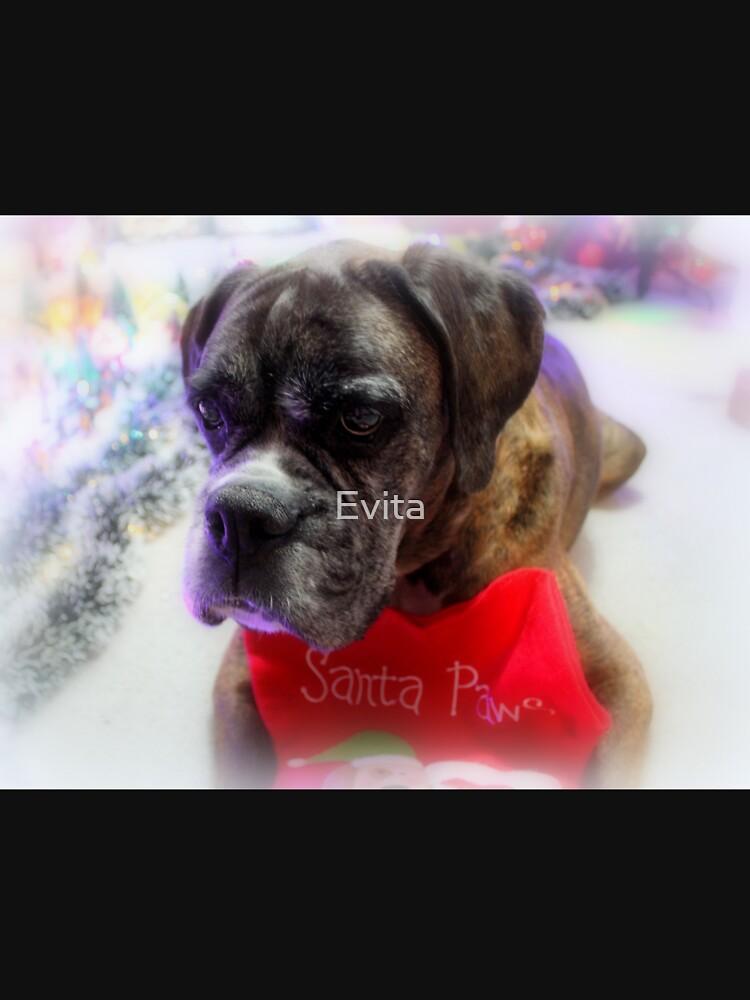 Mein Strumpf bereit für Santa - Boxer Dogs Series von Evita