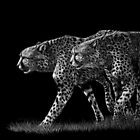 Double Trouble - cheetahs by Heather Ward