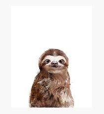 Little Sloth Photographic Print