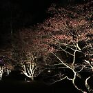 Night Acer by DAJPowell