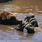 Grizzly Bear Water Play... by RichImage