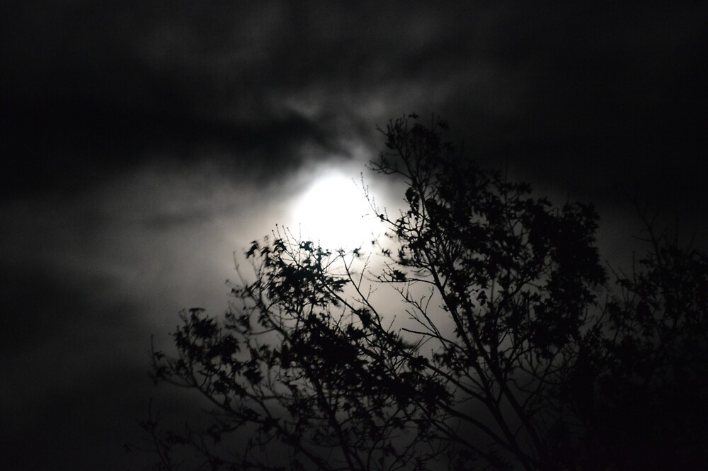 Halo Moon through Trees by CathyChristian